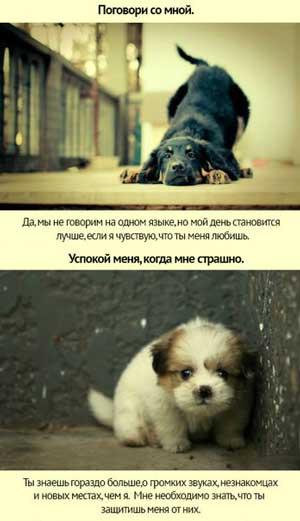 Пособие по дрессировке собак