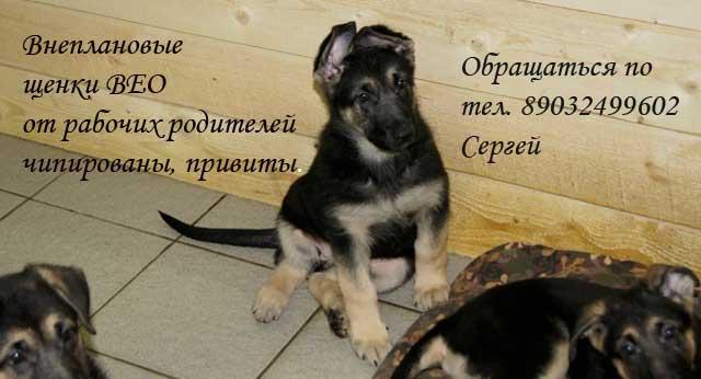 http://www.veoclub.ru/2012/veo_rek.jpg