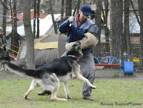 щенок восточно-европейской овчарки