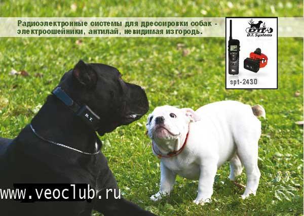 http://www.veoclub.ru/400.files/EO600_rh.jpg