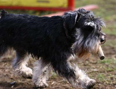 Для тех, кто любит.  Собака-кусака Вязание на Все-сама.ру - Модели, схемы .  Как вытащить клеща у кошки, ошейники и...