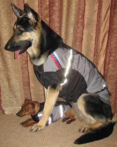 Одежда для собак для дрессировки и