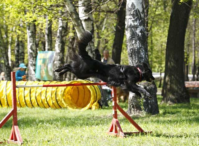 http://www.veoclub.ru/pokaz/24.jpg