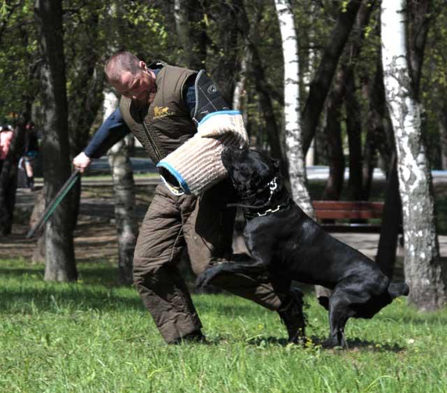 http://www.veoclub.ru/2011_Binar/22.jpg