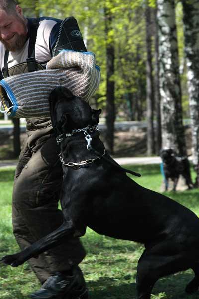 http://www.veoclub.ru/2011_Binar/54.jpg